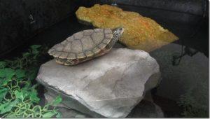 map-turtles
